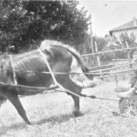 Silvestre Rovira a l'era de Ponsferrer 1955